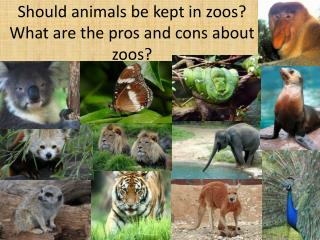 Should animals be kept in zoos?  What are the pros and cons about zoos?