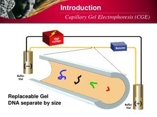 Capillary Gel Electrophoresis (CGE)