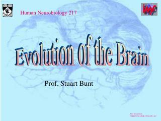 Prof. Stuart Bunt
