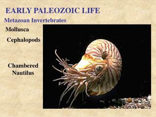 EARLY PALEOZOIC LIFE