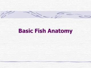Basic Fish Anatomy