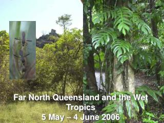Far North Queensland and the Wet Tropics 5 May – 4 June 2006