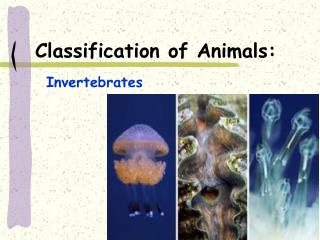 Classification of Animals: