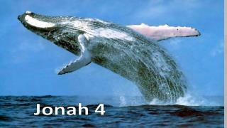 What kind of prophet was Jonah?????