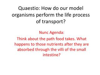 Quaestio: How do our model organisms perform the life process of transport?