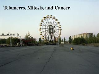 Telomeres, Mitosis, and Cancer