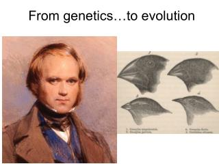 From genetics…to evolution