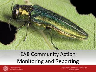 EAB Community Action  Monitoring and Reporting