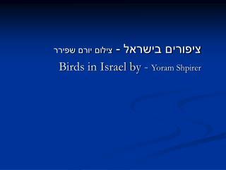 ציפורים בישראל -  צילום יורם שפירר Birds in Israel by -  Yoram Shpirer
