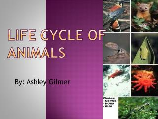 Life cycle of animals