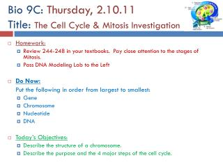 Bio 9C:  Thursday, 2.10.11 Title:  The Cell Cycle & Mitosis Investigation