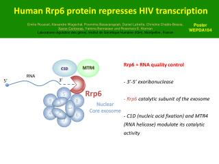 Human Rrp6 protein represses HIV transcription