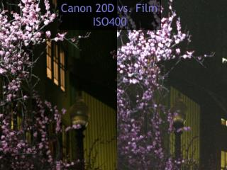 Canon 20D vs. Film ISO400