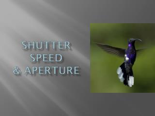 Shutter Speed  & Aperture