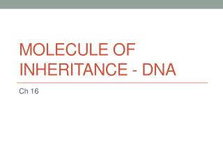 Molecule of Inheritance - DNA