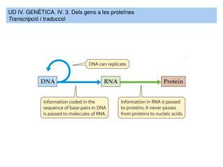 UD IV. GENÈTICA. IV. 3.  Dels gens a les proteïnes Transcripció  i  traducció
