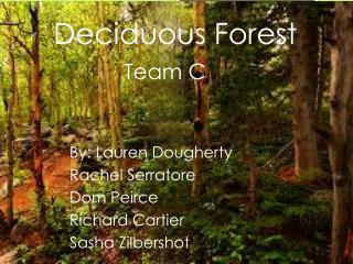 Deciduous Forest Team C