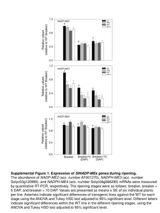 Supplemental Figure 1.  Expression of  SlNADP -MEs  genes during  ripening.