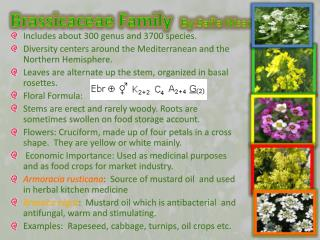 Brassicaceae  Family   By:Safia Nisar