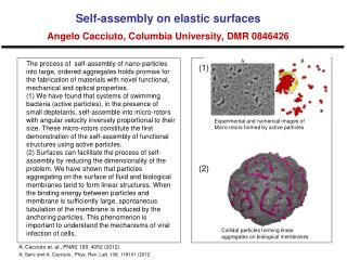 Self-assembly on elastic surfaces Angelo  Cacciuto , Columbia University, DMR 0846426