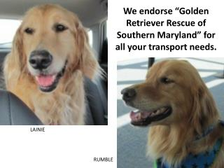 We endorse �Golden Retriever Rescue of Southern Maryland� for all your transport needs.
