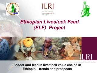 Ethiopian Livestock Feed (ELF)  Project