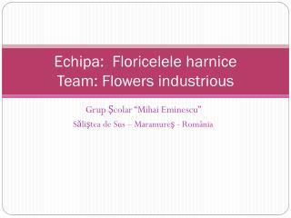 Echipa : Floricelel e harnice Team: F lowers industrious