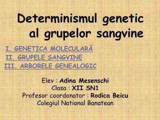 Determinismul genetic        al grupelor sang v ine