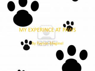 MY EXPERINCE AT PAWS