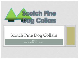 Scotch Pine Dog Collars