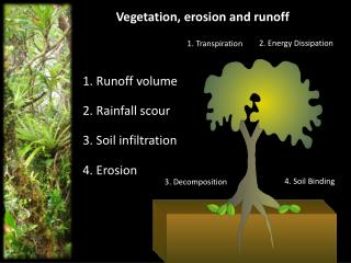 Vegetation, erosion and runoff