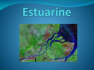 Estuarine