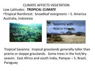 CLIMATE AFFECTS VEGETATION Low Latitudes:   TROPICAL CLIMATE