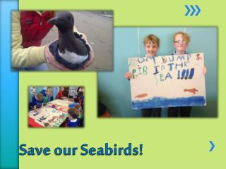 Save our Seabirds!