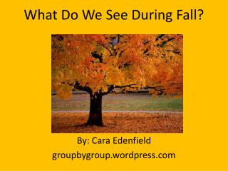What Do We See During Fall?