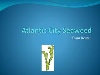 Atlantic City Seaweed
