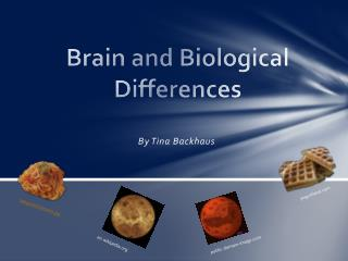 Brain and Biological Differences