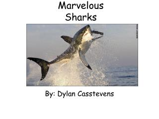 Marvelous  Sharks