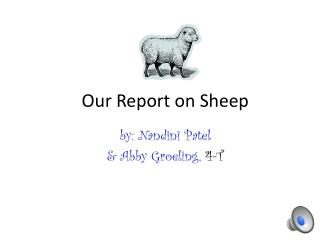 Our Report on Sheep