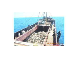 Figure 2 CHINESE FISHING VESSELS AT SCARBOROUGH SHOAL