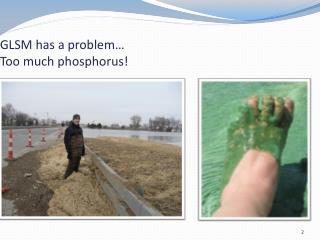 GLSM has a problem…  Too much phosphorus!