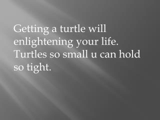 Getting a turtle will enlightening your life. Turtles so small u can hold so tight.