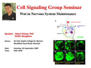 Cell Signaling Group Seminar Wnt in Nervous System Maintenance