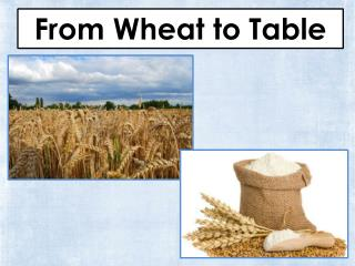 From Wheat to Table