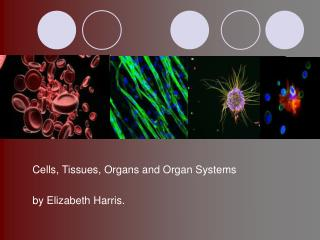 Cells, Tissues, Organs and Organ Systems  by Elizabeth Harris.
