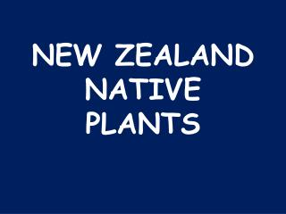 NEW ZEALAND NATIVE PLANTS
