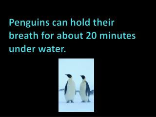Penguins can  hold  their breath for about  20  minutes under  water.