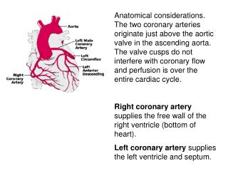 Coronary blood flow (CBF) Resting ≈  1 ml/min/gm .  About 200 ml/min for a 200 gm human heart.