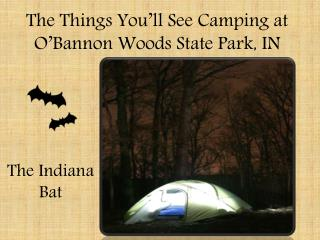 The Things You'll See Camping at O'Bannon Woods State Park, IN