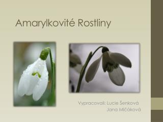 Amarylkovité Rostliny